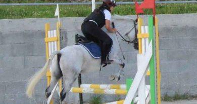 Egzamin na Brązową Odznakę Jeździecką PZJ